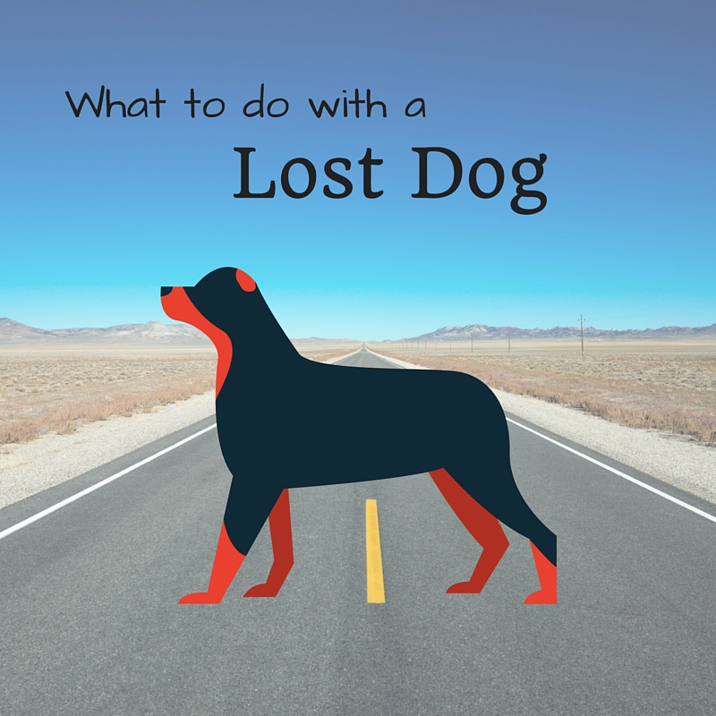 What To Do With a Lost Dog