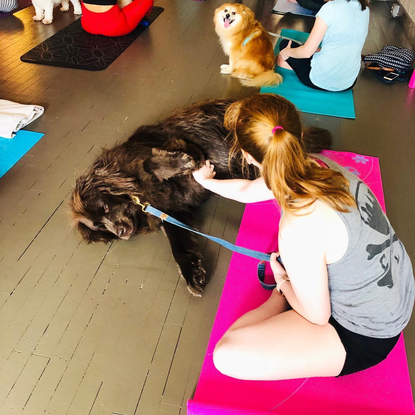Look how excited Hunter is to be doing doga!
