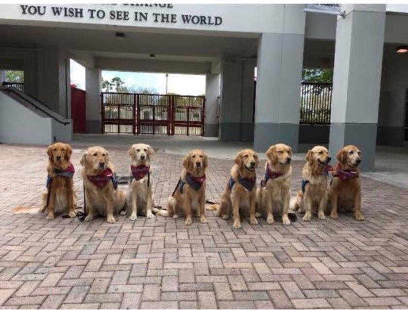 Therapy dogs visiting Parkland after students went back to class. Photo courtesy of Reddit. https://www.reddit.com/r/aww/comments/811q2p/therapy_dogs_waiting_to_welcome_the_parkland_kids/