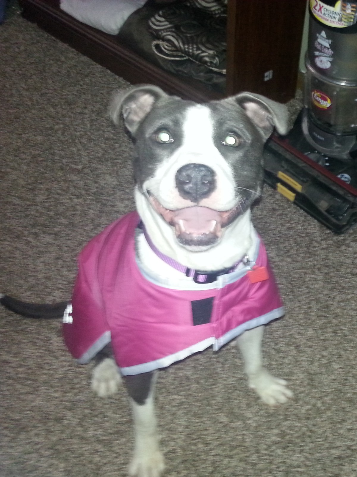 CLE Adoptable Canine of theWeek!