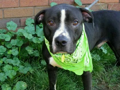 CLE Adoptable Canine of the Week!