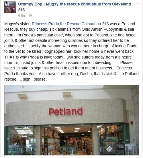 petland1