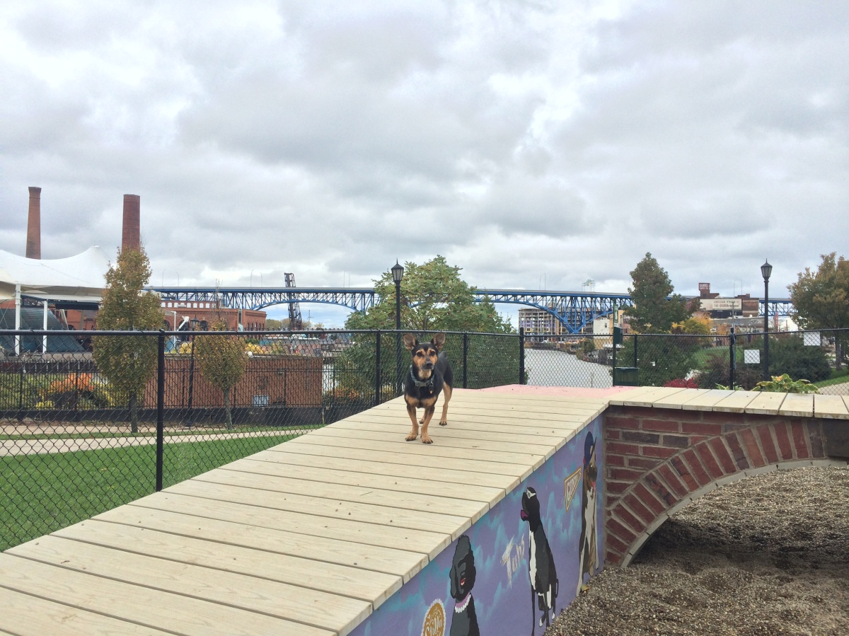 Cleveland Dog Park Tour: The Downtown Dog Park