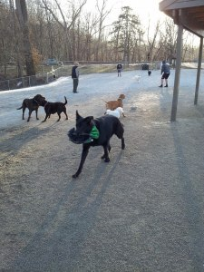 Photo courtesy of the Lakewood Dog Park Facebook page.