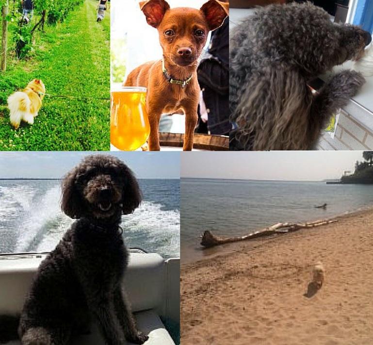 5 Dog Friendly SummerActivities