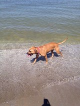 lake erie dog