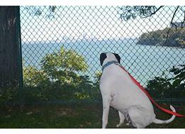 fence dog