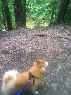 Hunter loves a good pack walk.