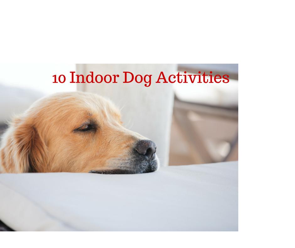 10 Indoor DogActivities