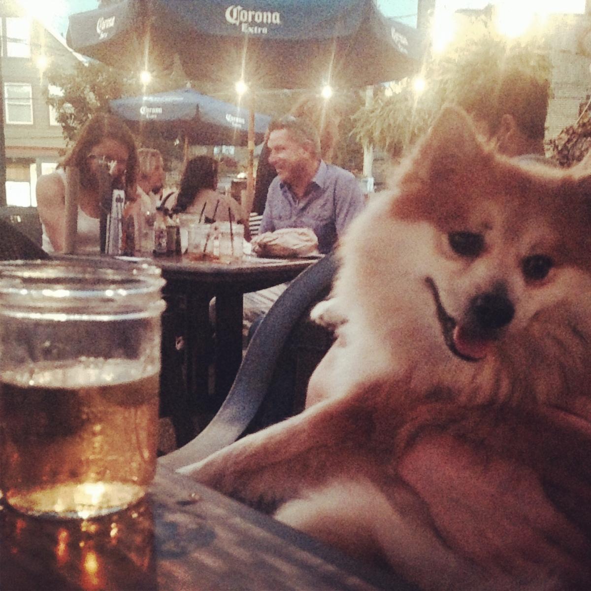 Top 10 Dog-FriendlyPatios