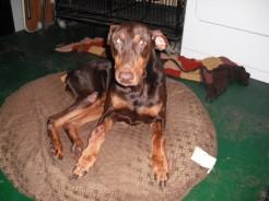 Scramble, the dog who inspired Barkfeast