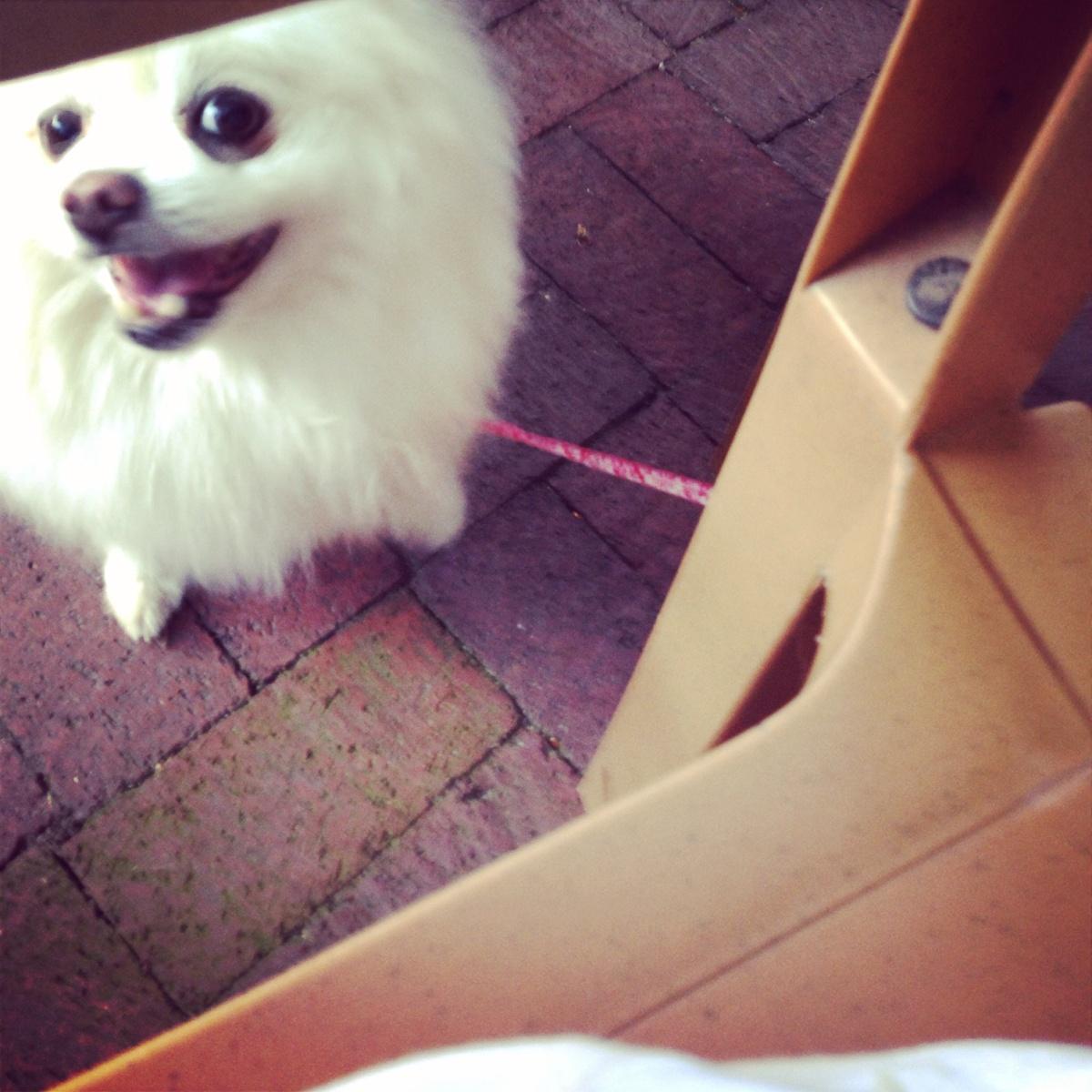 Dog Friendly Spotlight:Heck's