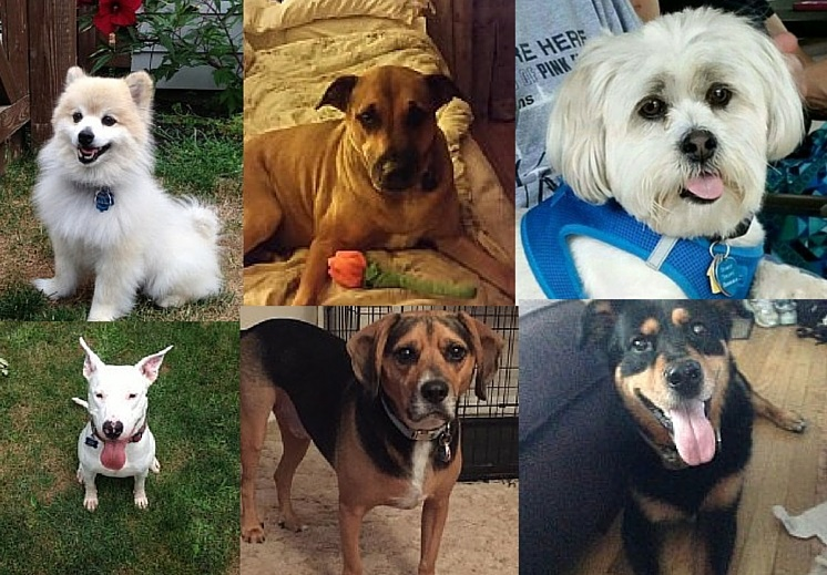 Adopt a Shelter Dog Month Stories