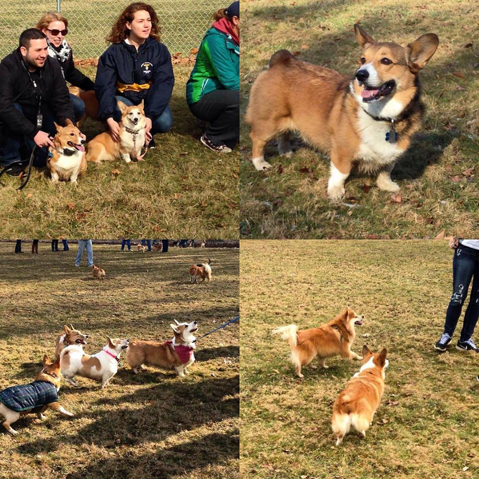 Cleveland-Area Dog Meetup Groups