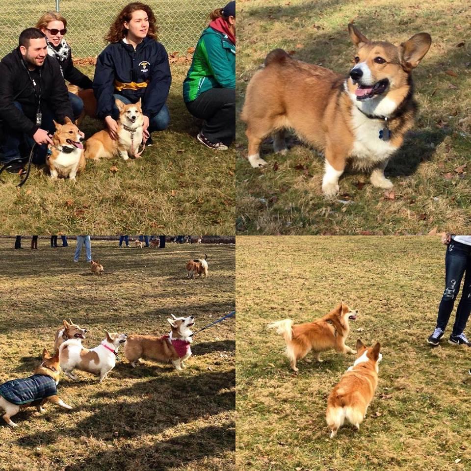Cleveland-Area Dog MeetupGroups