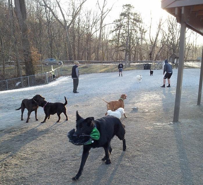 Cleveland Dog Park Tour: Lakewood DogPark