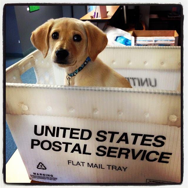 Dog-Friendly Office Spotlight: Embrace PetInsurance