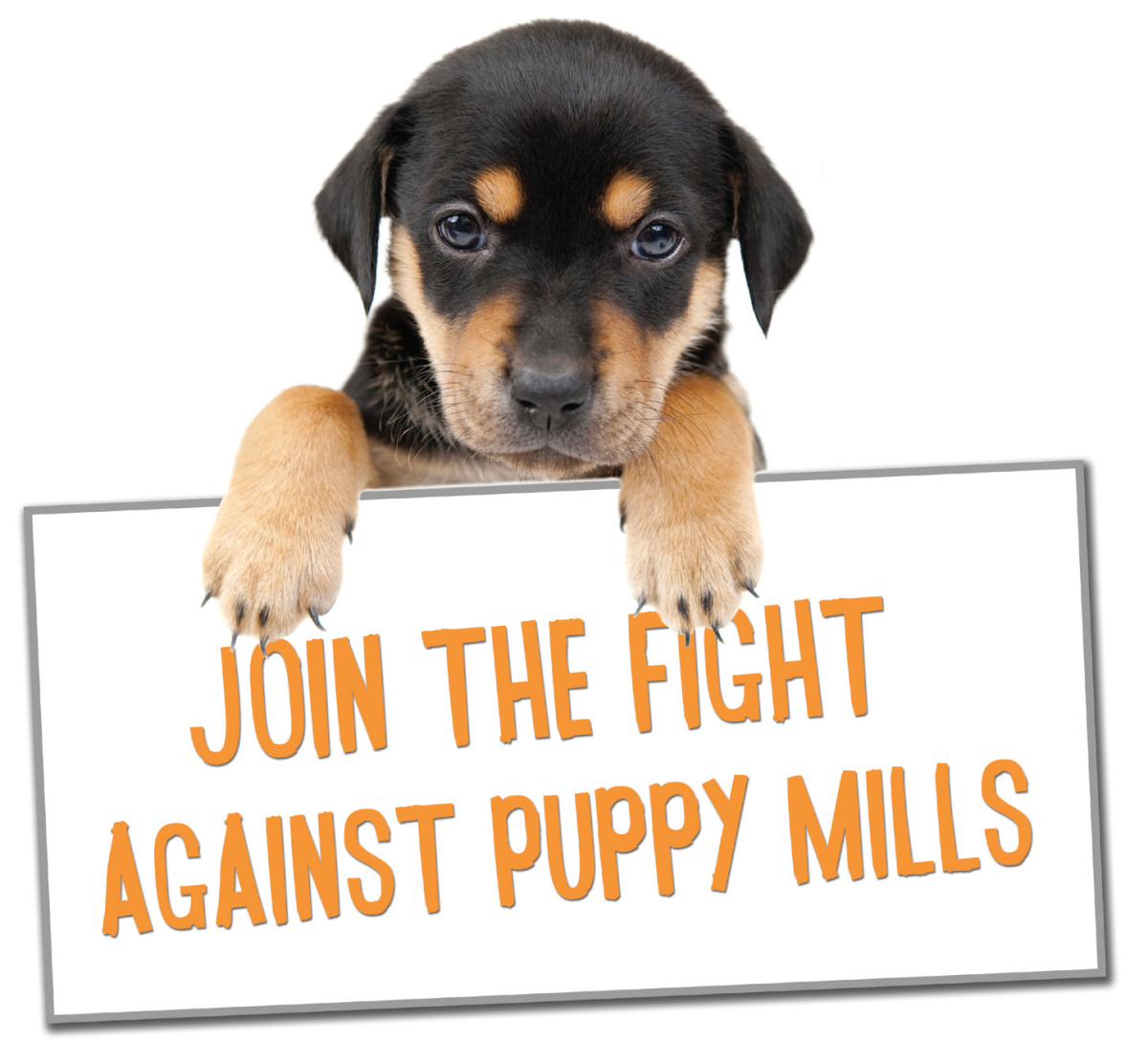 What you can do about puppymills