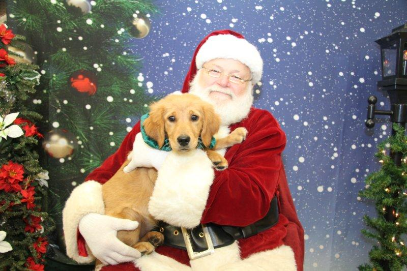 Mark Your Calendars: Santa Paws!