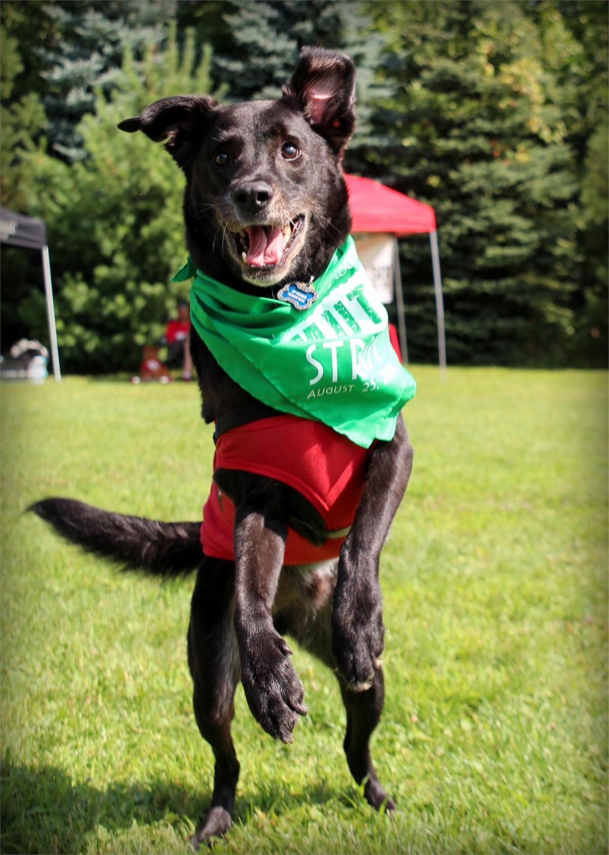 August Dog FriendlyEvents