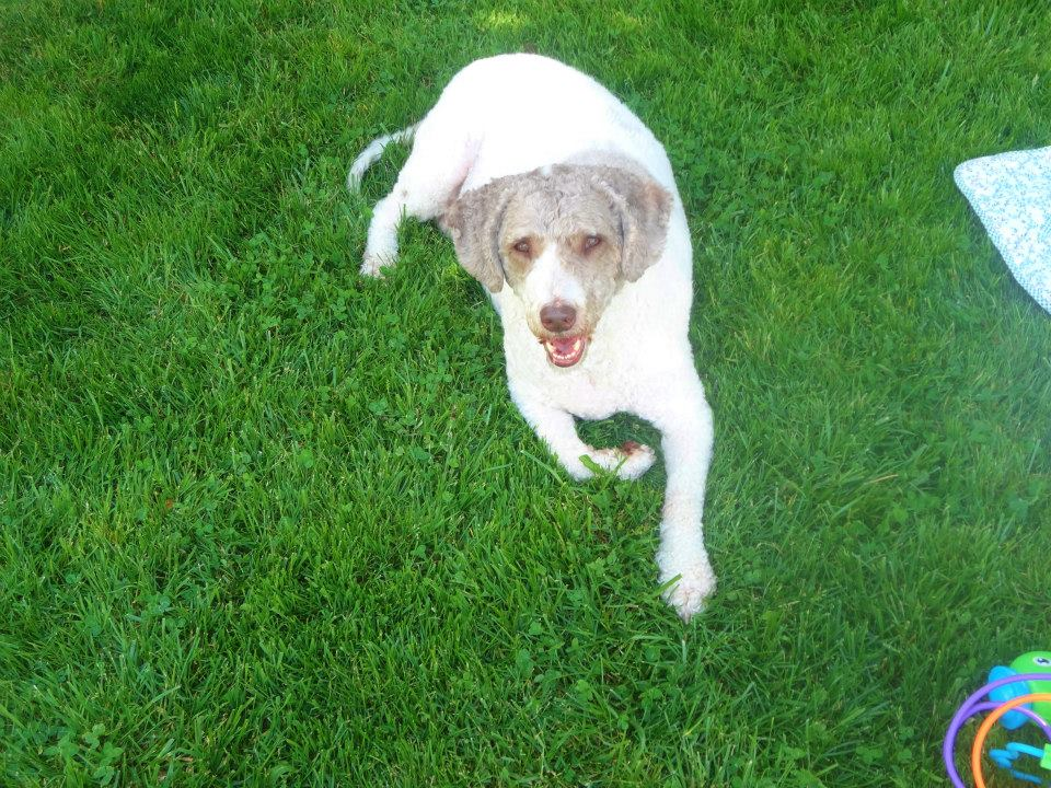 The Dog Owner Files: Saying Goodbye and Moving On – Life WithoutBruiser