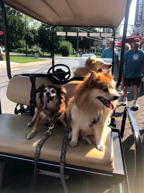 Dog-Friendly Road Trip: Put-in-Bay