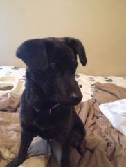 FOUND DOG - dropped off at Style Mutt March 11
