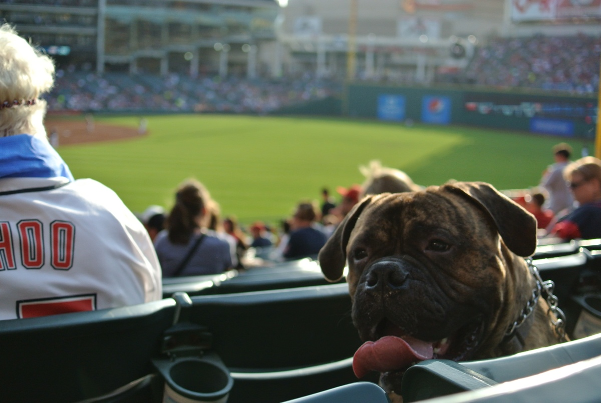 Dog-Friendly Baseball Games in theCLE