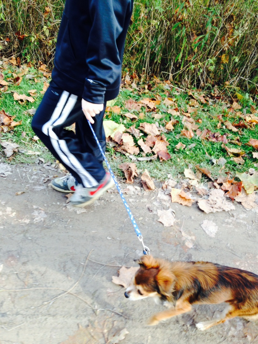 Roscoe walking the Towpath Trail with my nephew. A big step for him since he hasn't let someone other than me walk him before.