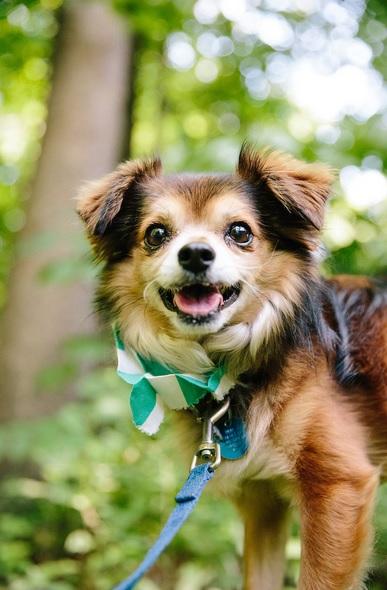 Happy National DogDay!