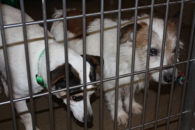 50 Dogs Rescued from a Hoarder — How You CanHelp