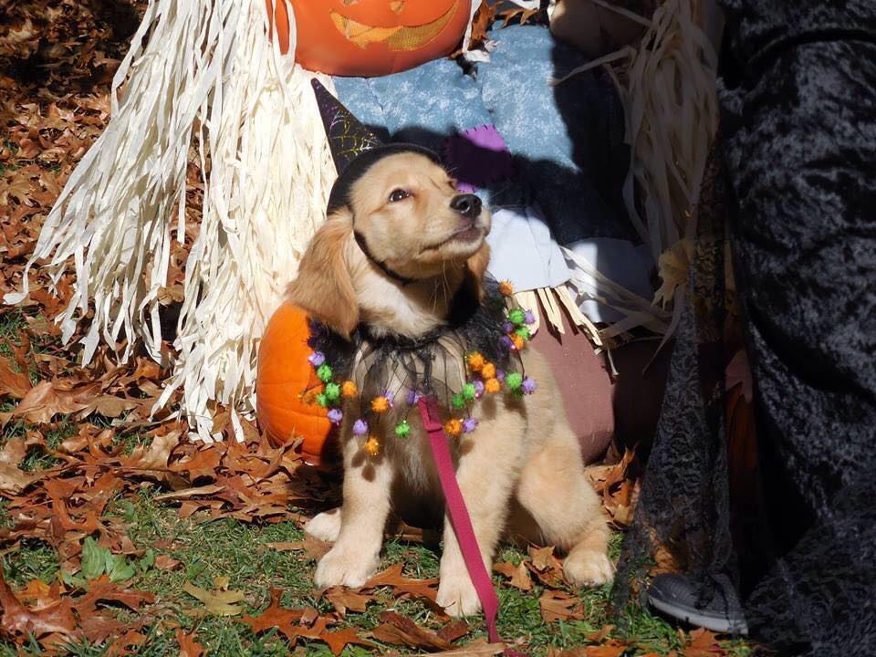 CLE Dog-Friendly Halloween Parties