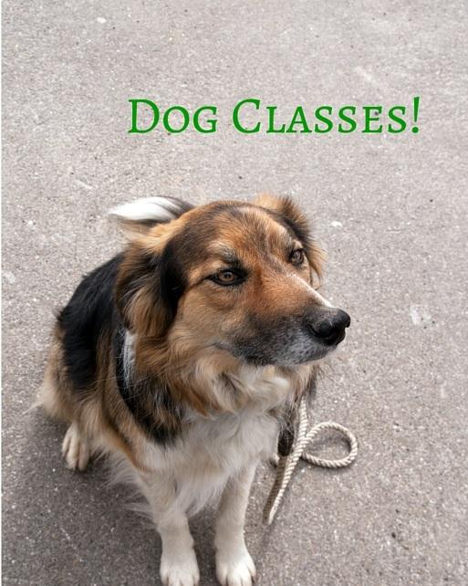 Fun Dog Classes