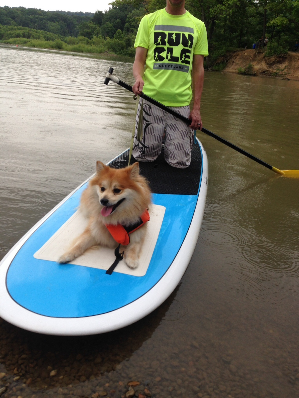 Paddleboarding Pup