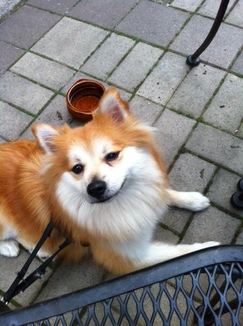 Dog-Friendly Patio Etiquette