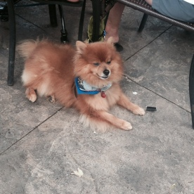 Bruno, Hunter's pom friend