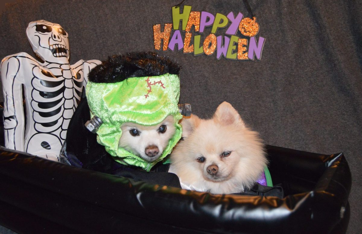 Cleveland Dog-Friendly Halloween Parties and Costume Contests