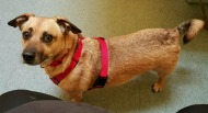 CLE Adoptable Canines of theWeek