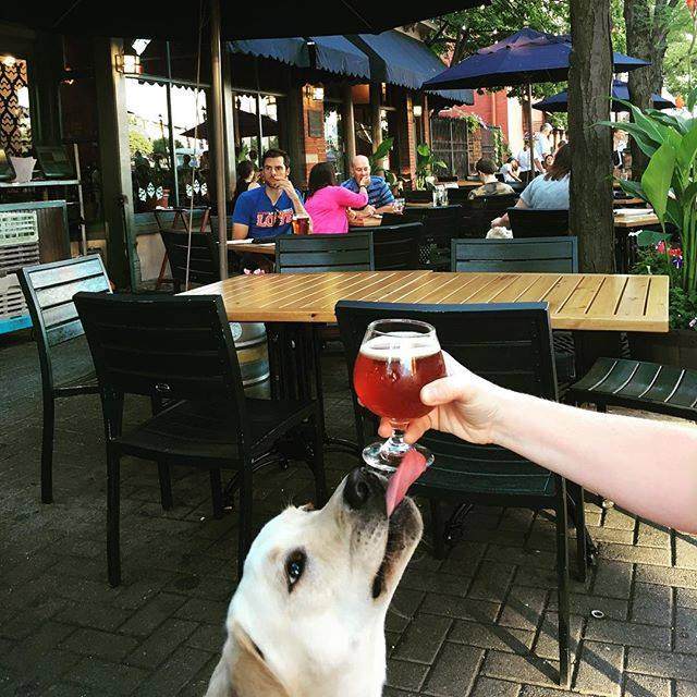 Cleveland Dog-Friendly Breweries