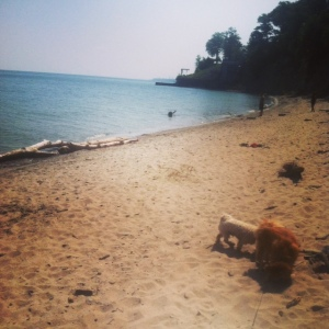 Cleveland dog beaches