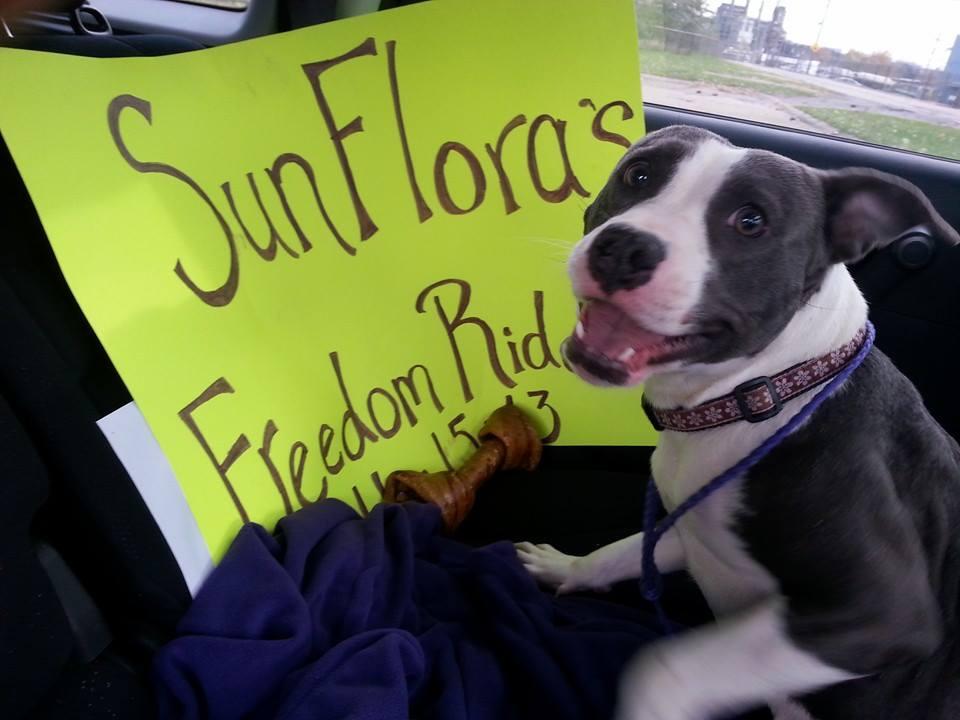 Freedom Rides!