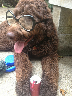 Meet the CLE Canine of the Week – RhettButler!