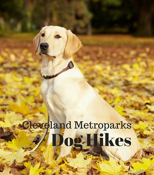 Cleveland Metroparks Fall and WinterHikes