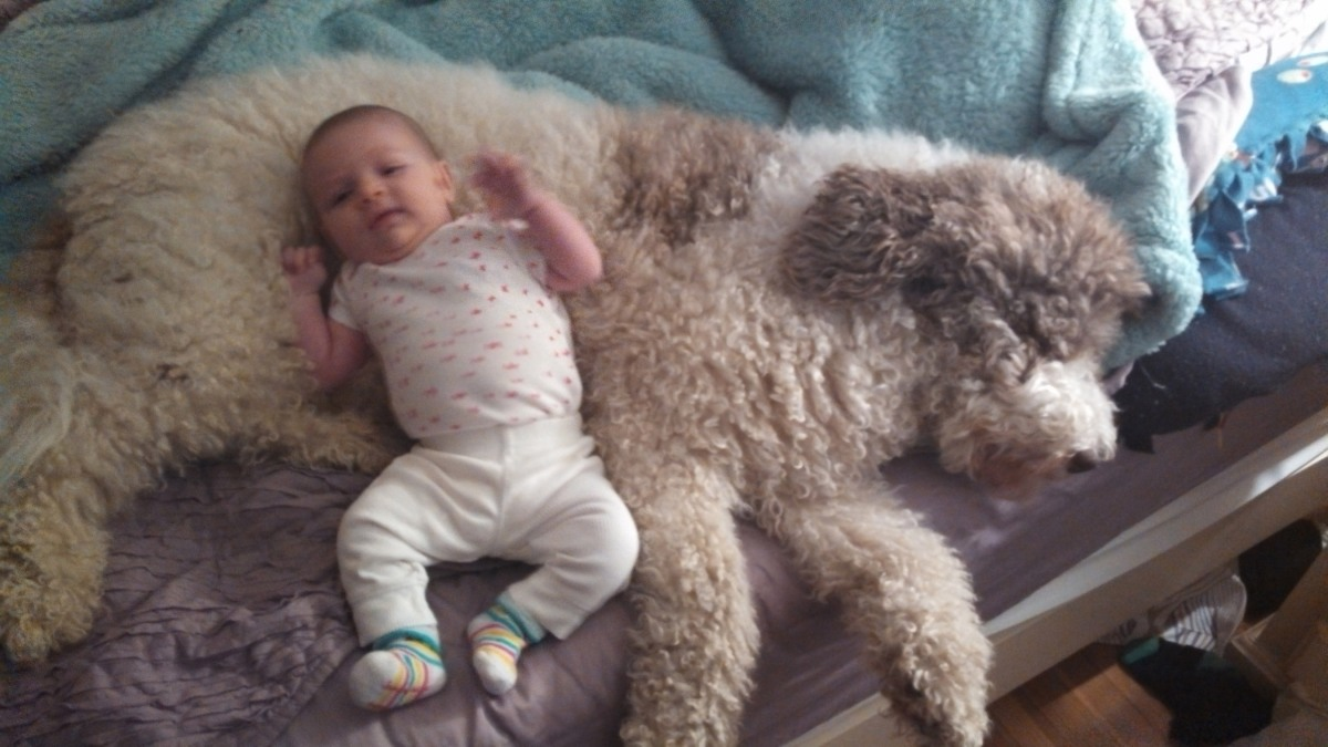 The Dog Owner Files: You're having a baby! How to break it to yourdog.