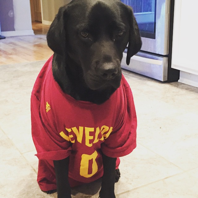 #Dogs4Cavs
