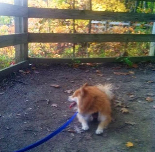 5 Fall Activities for You and YourDog