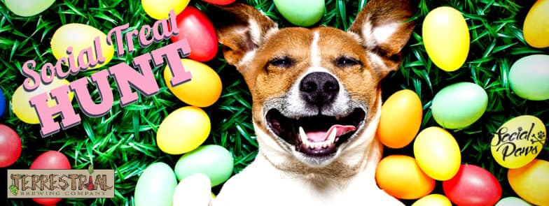 Dog-Friendly Easter Egg Hunts