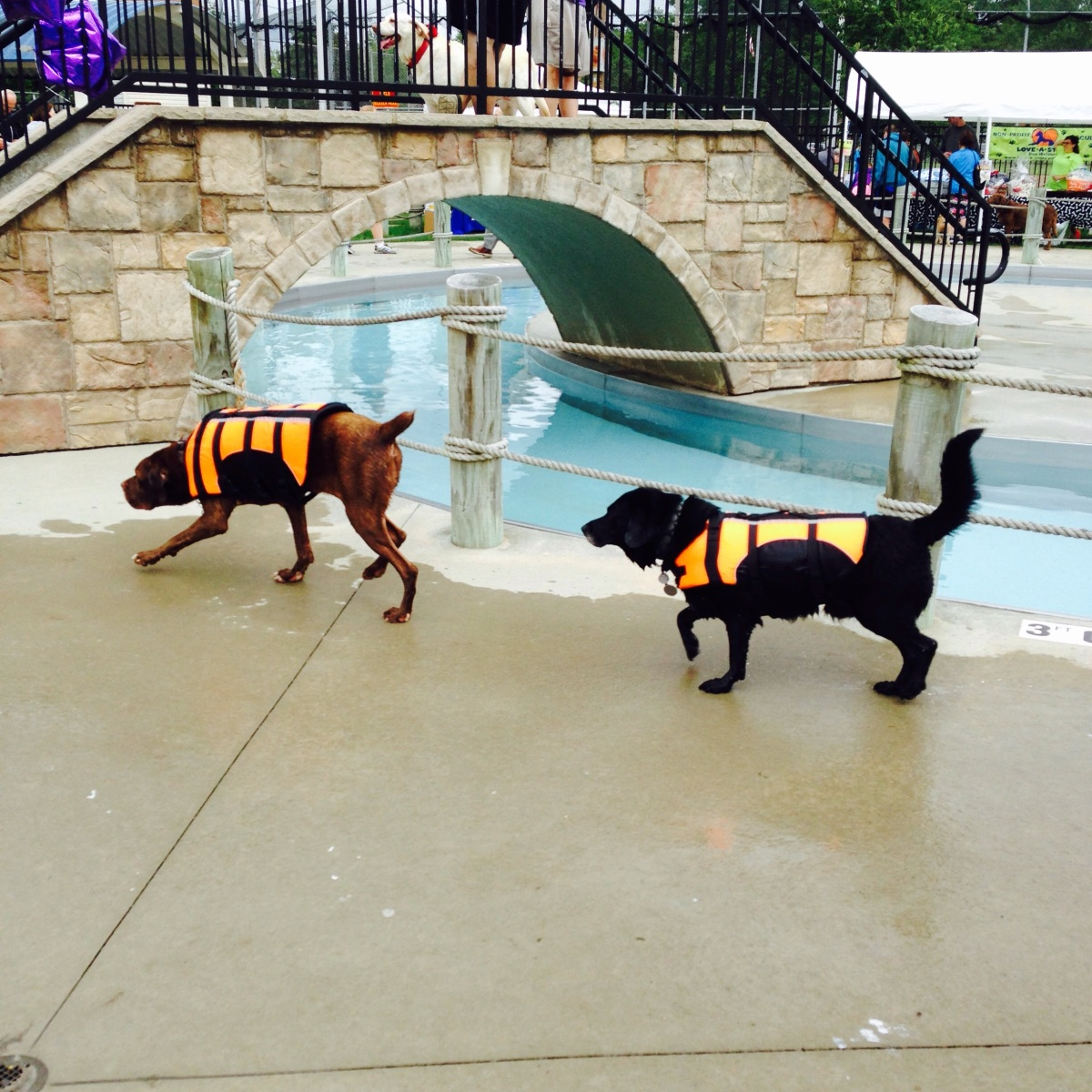 2018 Cleveland Dog Swim Events