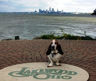CLE Canines of the Week