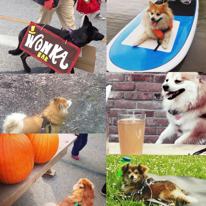 2016 Edition: 50 Things To Do With Your Dog in NortheastOhio